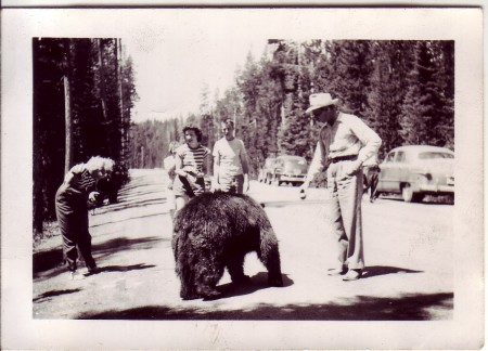 Feeding the Bears at Yellowstone from Starling Travel